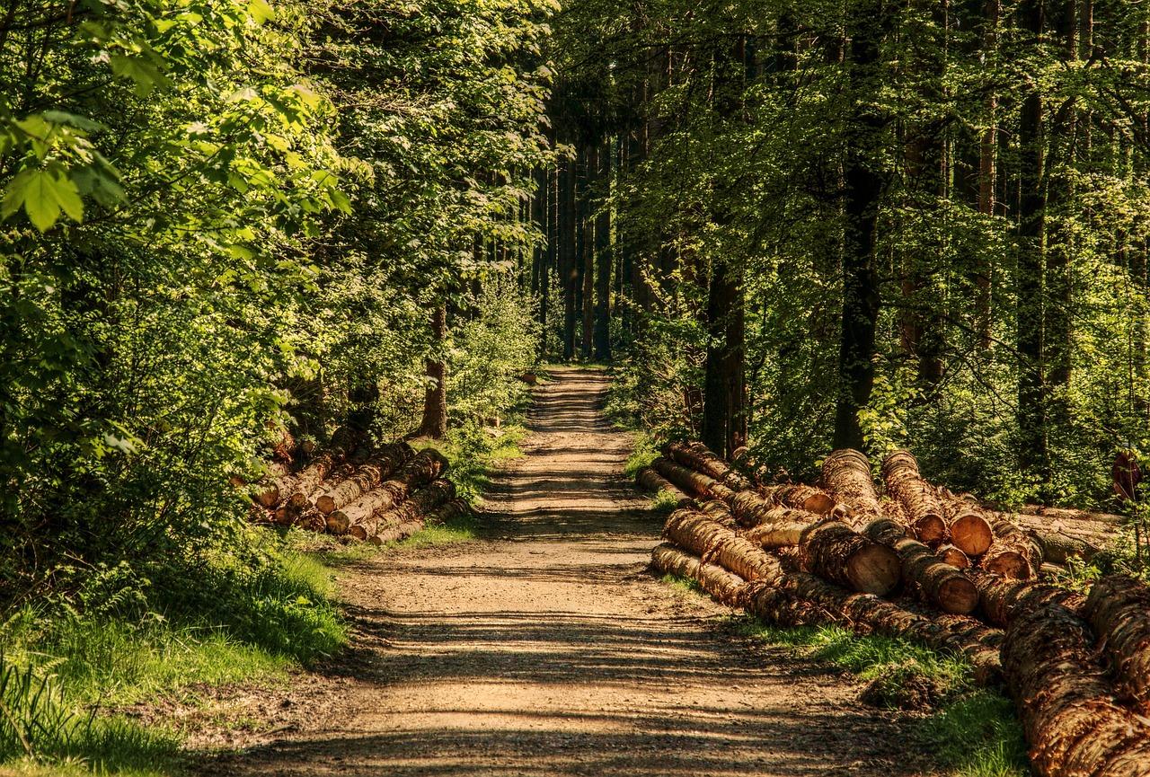 Le corps du Dieppois dépressif a été découvert dans sa voiture en forêt d'Arques - Illustration © Pixabay