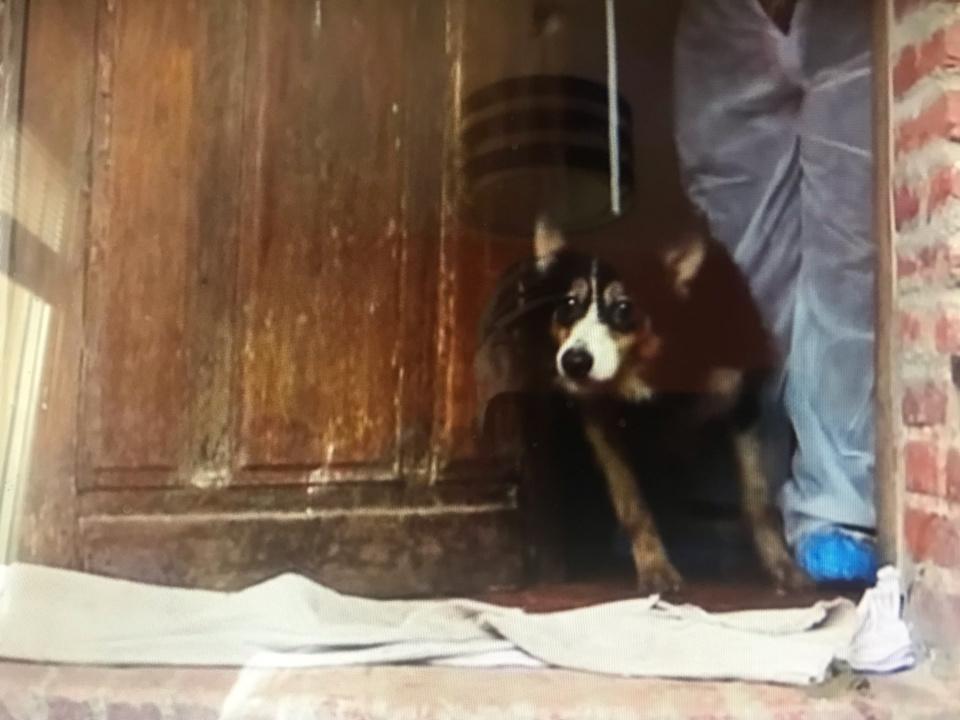 Trois cheins border-collie vivaient reclus dans leurs excréments, selon la SPA - Photo extraite de la vidéo SPA