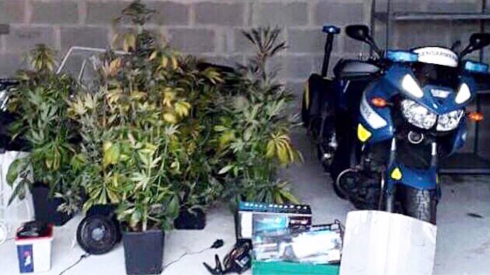 Six pieds de cannabis ont été saisis - Photo @ gendarmerie de l'Eure/Facebook
