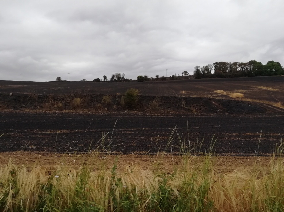 Paysage apocalyptique : 27 hectares de culture sur pied (blé et orge) et de prairies ont été détruits par les flammes - Photo © J.B.
