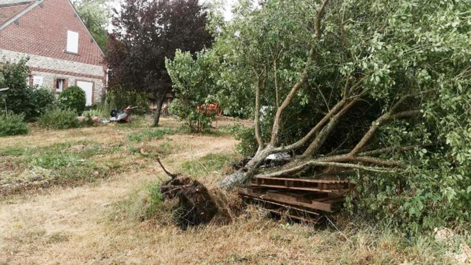 De violents orages ont éclaté en fin d'après-midi jusqu'en début de soirée en Seine-Maritime et dans l'Eure. Ils ont eu raison de cet arbre qui s'est déraciné sous la force des rafales à Vatteville, dans le secteur des Andelys (Eure) - Photo © C.L. / infonormandie