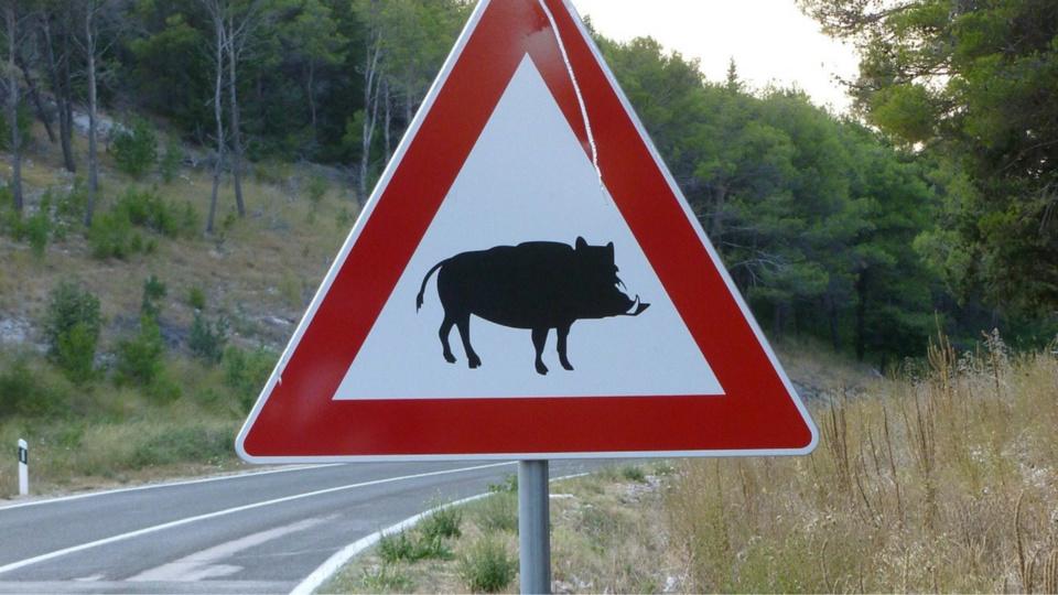 L'animal qui traversait la route a été percuté de plein fouet par le moto - Illustration © Pixabay