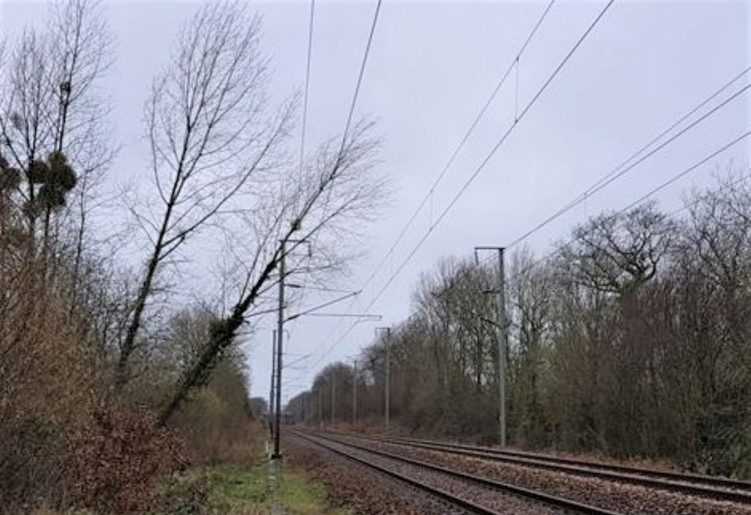 Des arbres et des branches ont endommagé les caténaires sur plusieurs lignes SNCF en Normandie - Photo © SNCF/Twitter
