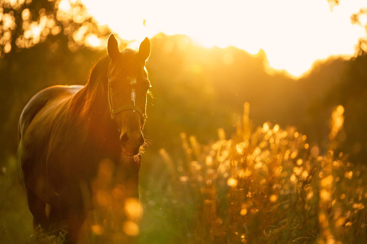 Le cheval est tombé dans une marnière - illustration © Pixabay