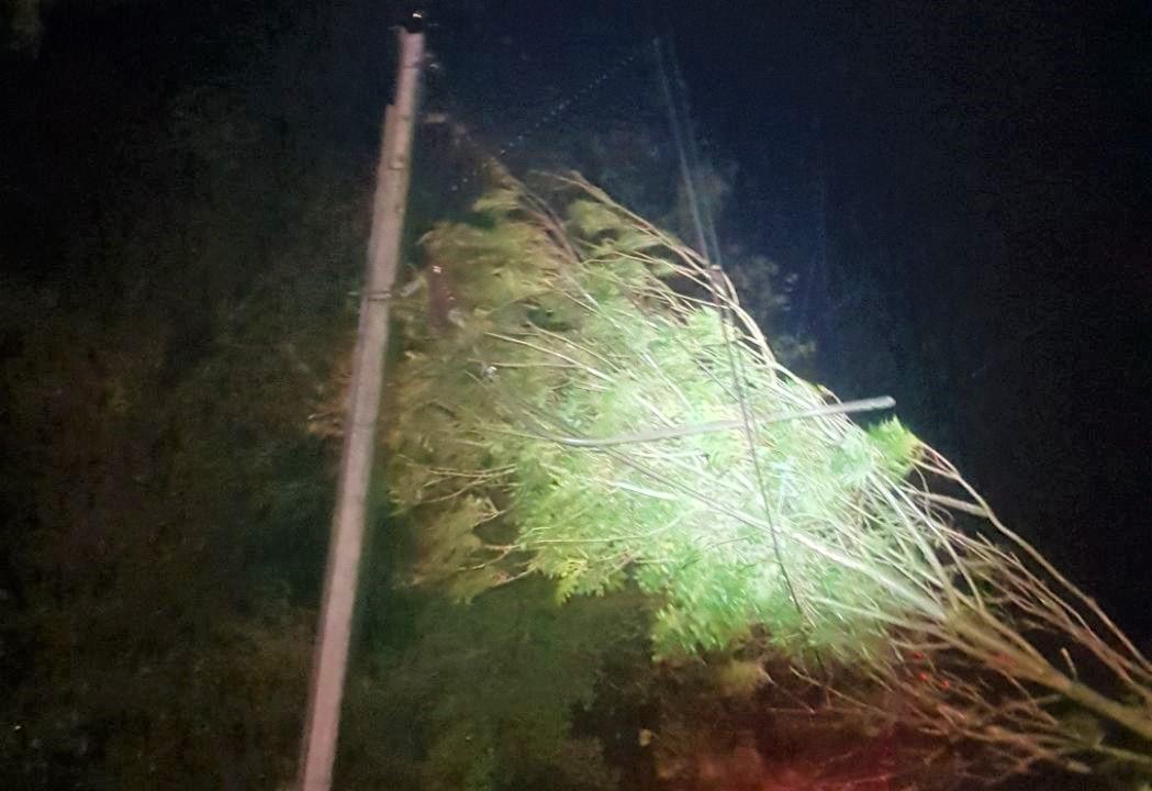 Des arbres sont tombés sur les voies dans le secteur du Havre et de Breauté et ont arraché des lignes électriques - Photo © SNCF Nomad Trains/ Twitter