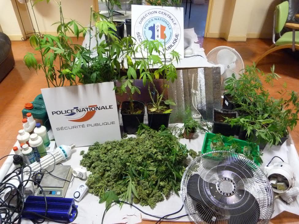 Les pieds de cannabis et le matériel permettant de les faire pousser ont été saisis (Photo DR)