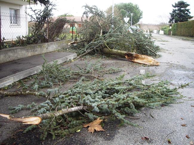 Arbres, branches et fils électriques arrachés sont pour l'essentiel la nature des interventions ce matin dans l'Eure (Photo d'illustration)