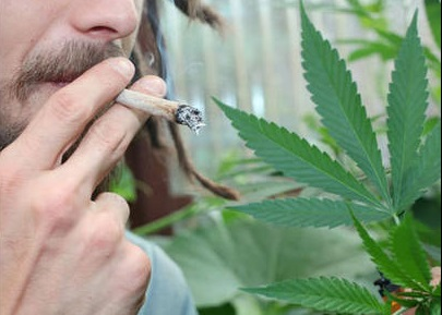 Il cultivait de l'herbe de cannabis pour sa consommation personnelle, soit dix joints par jour (Photo d'illustration)