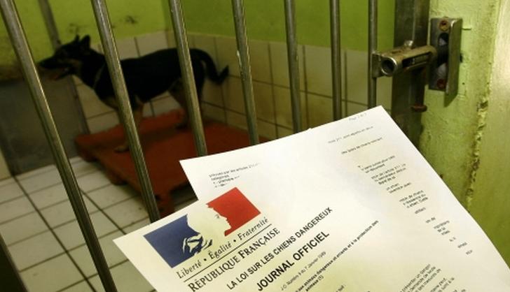 Le maire de Rouen a signé un arrêté municipal autorisant les policiers à placer le chien mordeur en fourrrière (Photo d'illustration)