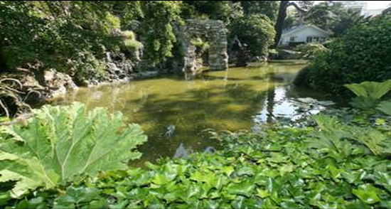 Le Havre : l'état de santé de trois arbres du parc Hauser ausculté par l'Office national des forêts