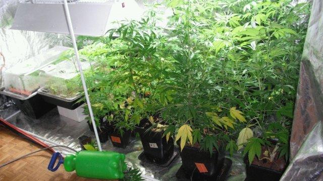 La culture clandestine de plants de cannabis nécessite tout un attirail : lampes de forte puissance, vserre d'humidification, aérateur, ventilateur... (Photo d'illustration)