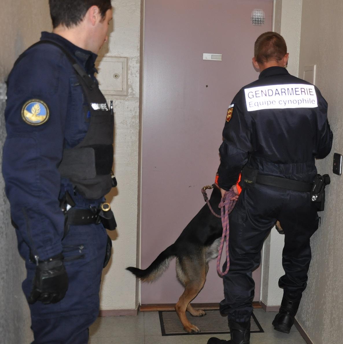 Six équipes cynophiles de la gendarmerie et des douanes ont été associés à l'opération anti-drogue (Photo d'illustration @infoNormandie)