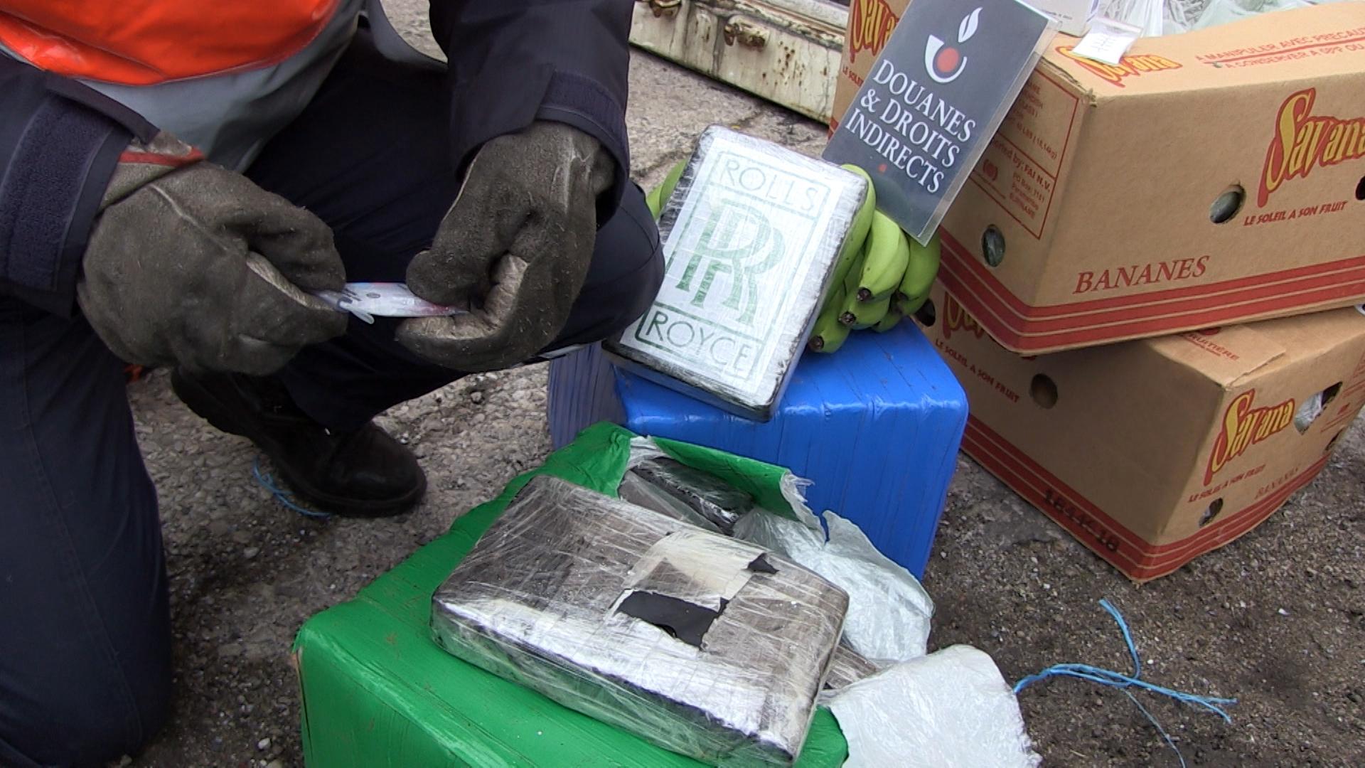 La drogue était conditionnée et cachée parmi les régimes de bananes (Photo Douane)