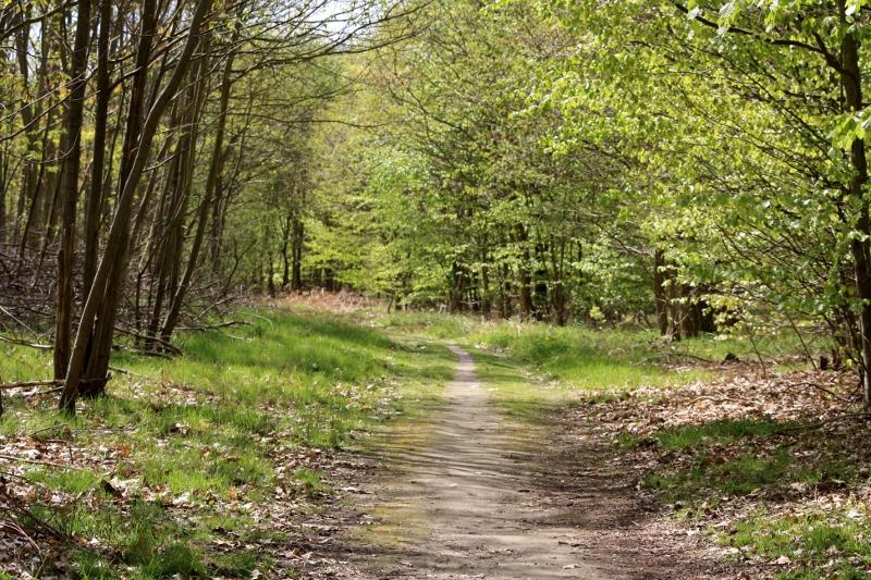 Le cadavre de la retraité disparue depuis le 11 novembre a été retrouvé ce lundi matin dissimulé en forêt de Roumare, au Val-de-la-Haye, dans la banlieue de Rouen (Photo d'illustration)