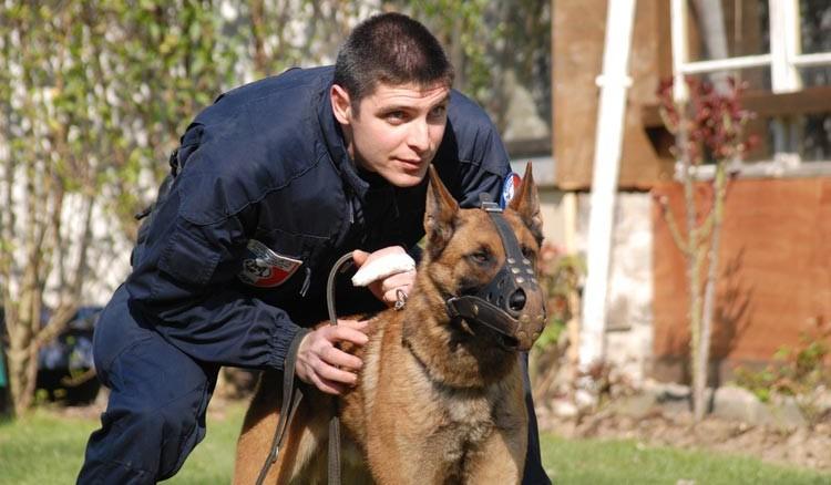 Les chiens policiers sont dressés pour neutraliser, sans le blesser, un agresseur (Photo d'illustration Préfecture de police)