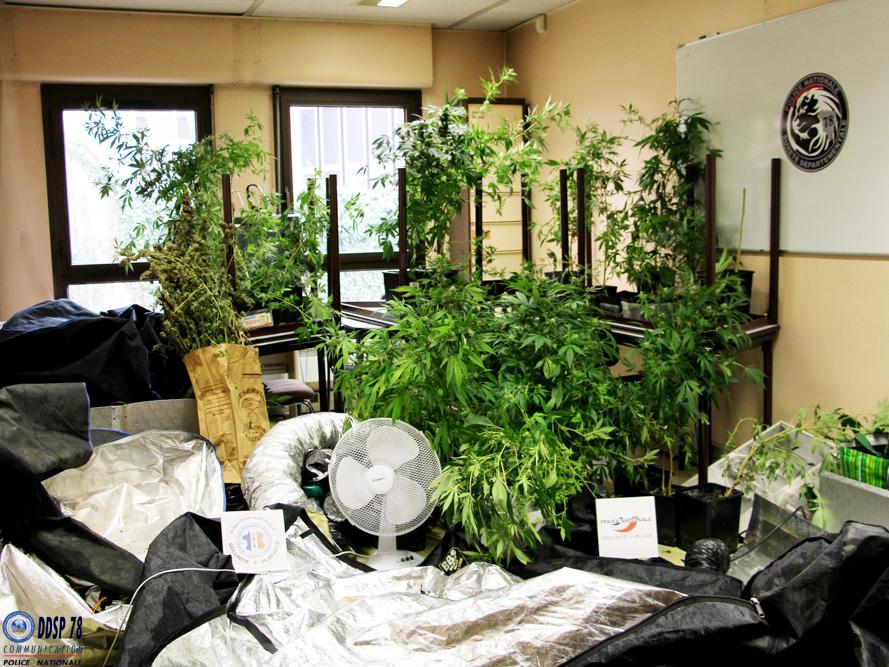 Les policiers ont saisi dans l'appartement des plants de cannabis et toute l matériel nécessaire à leur culture (Photo @DDSP78)