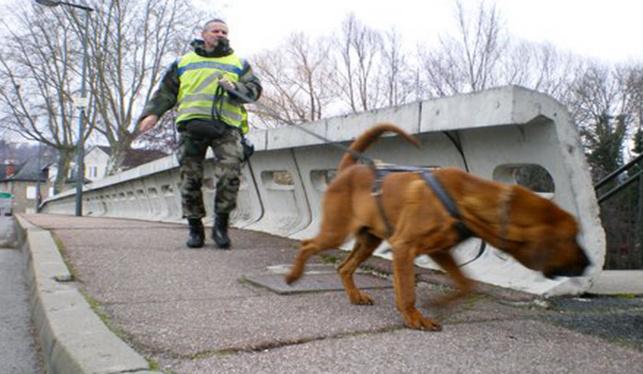 Les services de police ont demandé le concours de chiens pisteurs pour tenter de retrouver la trace du disparu (Illustration)
