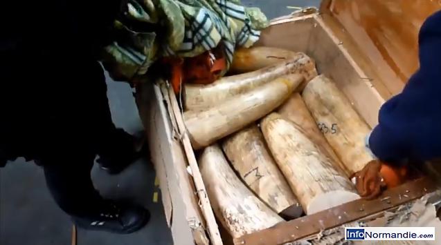 L'ivoire était dissimulée dans une caisse  (@Photo extraite de la vidéo de la douane)