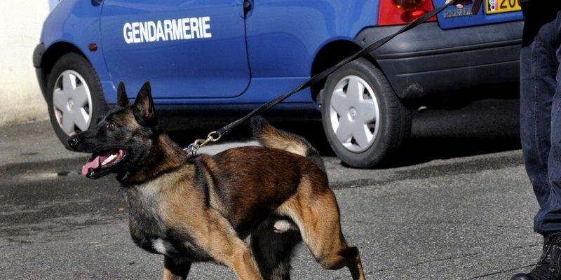 Le chien anti-drogue est tombé sur une boulette de résine de cannabis dans le véhicule contrôlé par les gendarmes (Photo d'llustration)