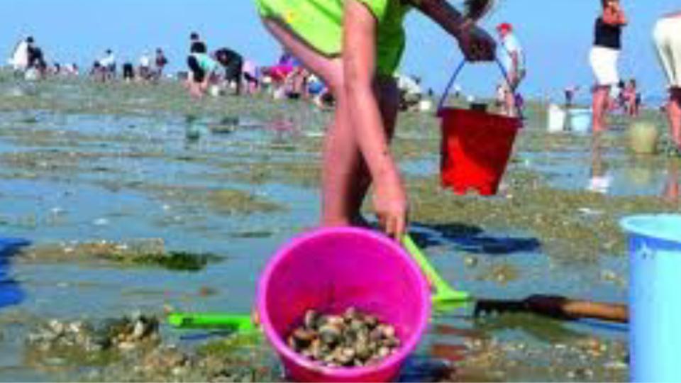 Le ramassage des coquillages interdit en Seine-Maritime entre le cap d'Antifer et Veulettes