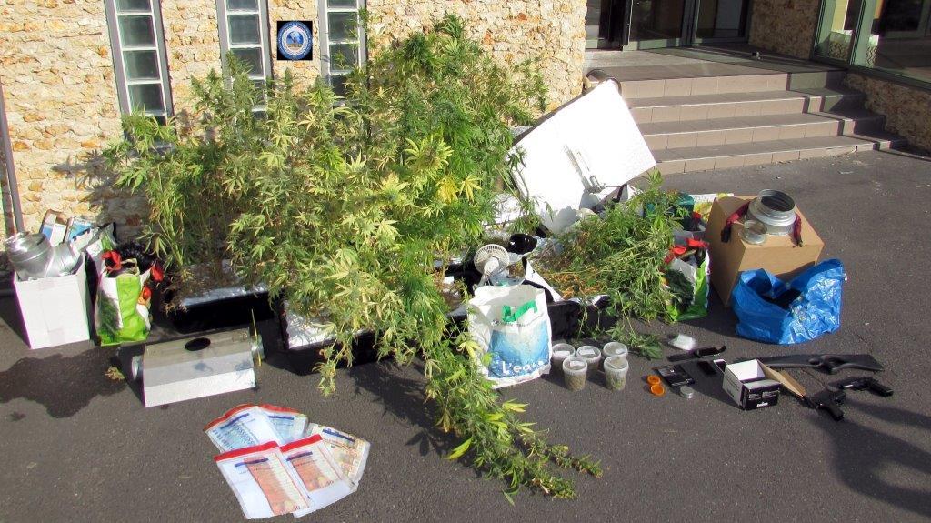 Les policiers ont découvert entre autres 90 plants de cannabis en culture dans le pavillon du quadragénaire qui a reconnu se livrer à un trafic (photo @DDSP78)