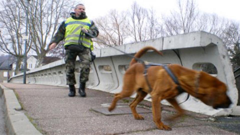 Illustration. Le chien pisteur de la gendarmerie a retrouvé la trace de l'enfant