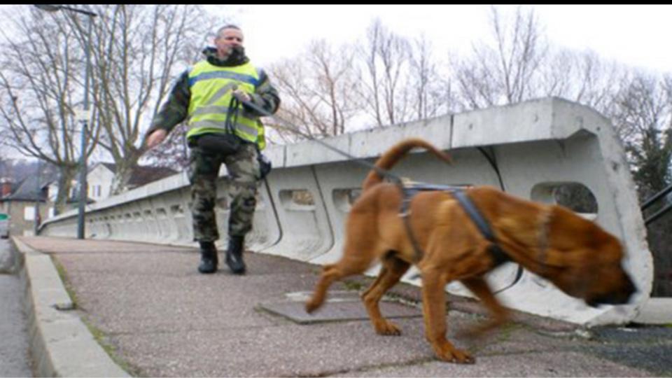 Le chien des gendarmes a pu retrouver la piste du voleur (Illustration)