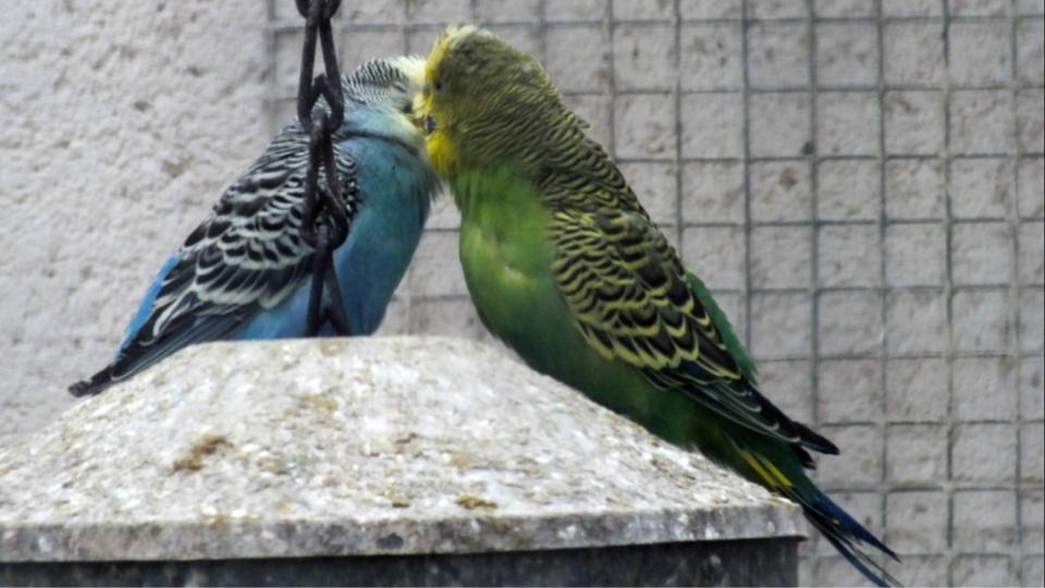 Les oiseaux d'une volière ont été aspergés de poudre d'extincteurs et un manège d'enfants a été dégradé (Illustration)
