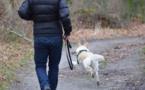 Yvelines : son chien est tué par un mystérieux tireur alors qu'elle le promenait