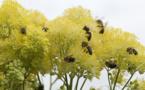Dans l'Eure, des jachères pour les abeilles : le département débloque 10 000€