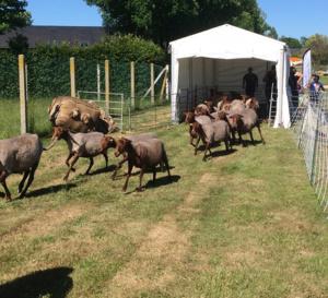 Tonte des moutons, spectacles, ateliers nature, stands ludiques et promenades sont également au programme - Photo © C.D.27