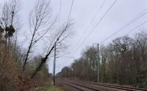Tempête Dennis en Normandie : trains perturbés, arbres arrachés, trois blessés en Seine-Maritime
