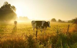 Deux vaches enlisées à Paluel : l'une est morte, les pompiers tentent de sauver la seconde