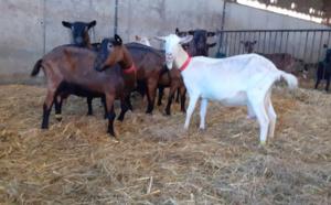 La chèvrerie d'Élise est implantée au Plessis-Hébert - photo @ Facebook
