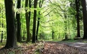 Les assassins présumés d'Alexandre sur les lieux du crime en forêt de Lyons