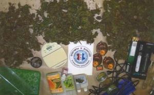 Il revendait l'herbe de cannabis qu'il cultivait chez un ami à Petit-Quevilly