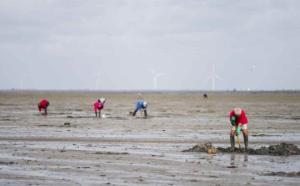 Forts coefficients de marée en Normandie dès dimanche : attention danger
