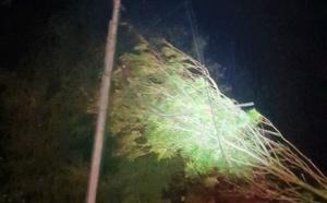 Toitures envolées, trafic SNCF interrompu, arbres sur les routes : la tempête Aurore a frappé la Seine-Maritime