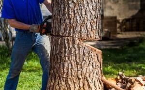 L'arbre qu'e l'employé était en train de tronçonner s'est abattu sur lui - Illustration © Adobe Stock