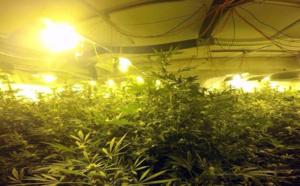 La villa abritait une culture de plus de 4.000 plants de cannabis, près de Nantes
