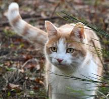 Seine-Maritime : deux chats et un chien tués par de mystérieux tireurs dans l'agglomération de Rouen