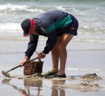 Calvados : la pêche à pied interdite temporairement dans le secteur de Ouistreham