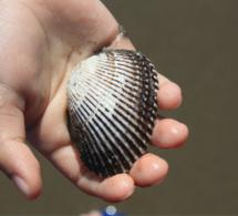 Santé. La pêche à pied des coquillages interdite sur la plage de Houlgate (Calvados)