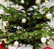 Recyclage des sapins de Noël : au Havre, des points de collecte sont mis en place dans toute la ville