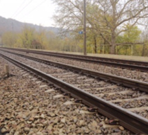 Yvelines : un cheval en divagation percuté par un train à Fontenay-le-Fleury