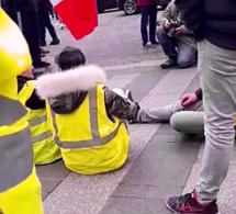 Gilets jaunes « acte XII » : nouveaux affrontements avec la police et neuf interpellations à Rouen et au Havre