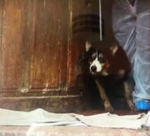 49 chats et chiens vivaient en captivité dans une maison insalubre en Seine-Maritime