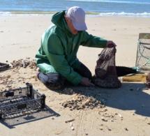 Le ramassage des coquillages filtreurs interdit entre le Cap d'Antifer et Veulettes-sur-Mer