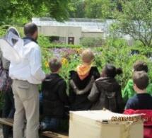 Action pédagogique : Trois ruches installées à l'Hôtel de ville de Rouen