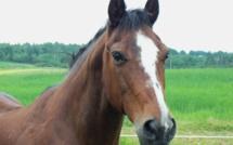 Seine-Maritime : un cheval coincé plus de quatre heures dans un trou d'eau